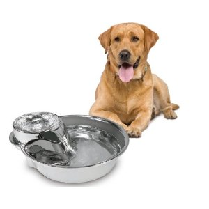 dog-drinking-fountain